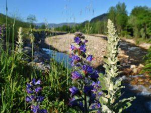 Río Saja en Ruente